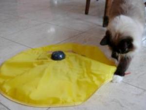 Best Feline Interactive Toys