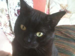 Cat Grooming Camden – Moro