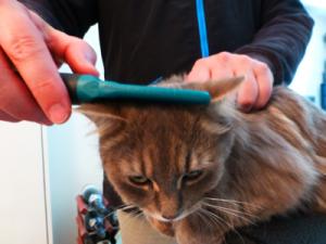 Cat Grooming Clapham – Mitzi