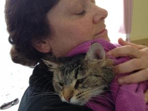 Cat Grooming Kingsbury – Lanlan and Mila