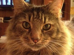 Cat Grooming Regents Park – Lucky
