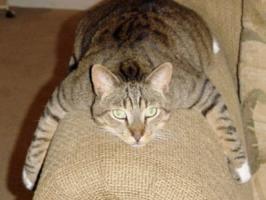 Cat behaviourist feedback for: Maggie