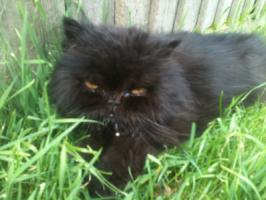 Cat behaviourist feedback for: Noodles