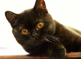 Notting Hill Cat Sitter