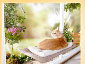 Giving your in door cat a view