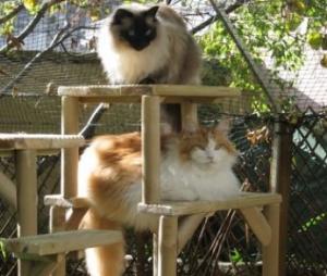 Hand made cat climbing towers