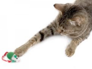 How to Properly Play With Your Cat