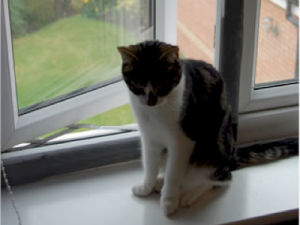 How to cat proof your windows