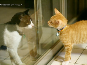 Introducing-a-new-cat-into-your-household