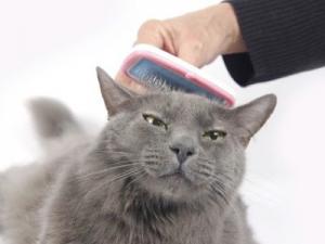 London mobile cat groomer