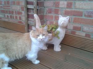 Mobile cat grooming Enfield: Gali