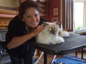 Mobile cat grooming Hertfordshire: Star