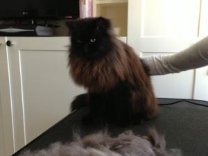 Mobile cat grooming Lambeth: Paddington