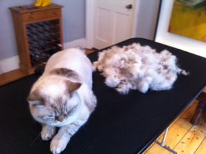 Mobile cat grooming WC1: Esme