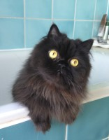 cat grooming specialist