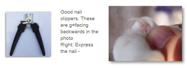 how-to-trim-cat-nails