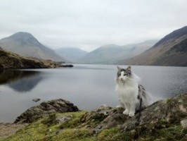 Travelling-Cats