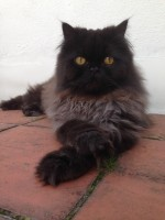 cat-sitter-Holland-Park