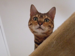 Feline stress|feline separation anxiety