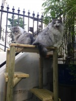cat-trees-for-outdoors