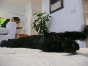 pet sitting service W11