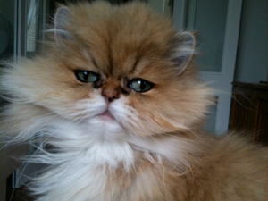 recommended-cat-sitter-Westbourne-Park