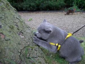 Notting-Hill-cat-care-cat-sitting-company