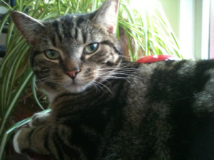 original notting hill cat company