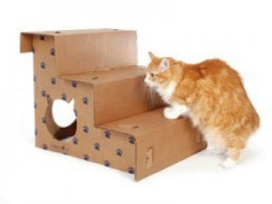 Mobility and Incontinence in older cats