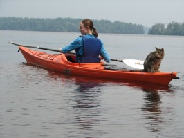 Cats and Kayaks