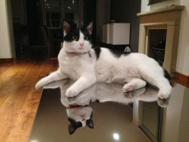 cat sitter Bayswater