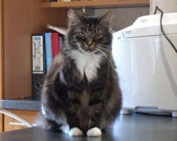 seeking a cat behaviourist in UK
