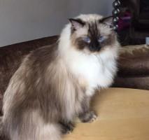 hampstead mobile cat groomer