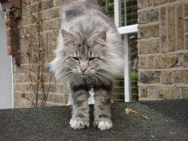 mobile cat groomer Putney