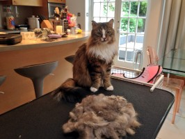 mobile cat groomer Wandsworth