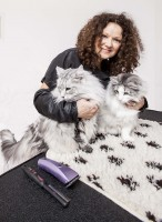 cat grooming lessons for cat owners