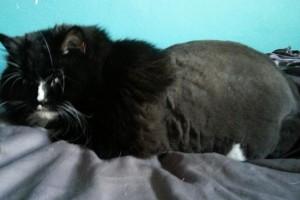 cat groomer NW10