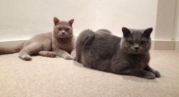 cat-sitter-maida-vale