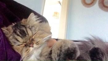 Notting Hill Cat Sitting Company
