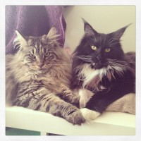 Notting Hill cat sitters