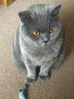 mobile-cat-groomer