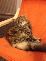 mobile cat grooming expert London UK