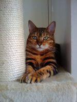 Cat sitting Bayswater - Sophie