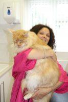 cat-groomer-Notting-Hill-Holland-Park-Ladbroke-Grove testimonial