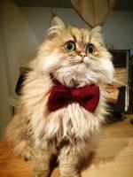 mobile cat groomer in Fulham
