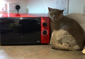 Harlesden cat grooming