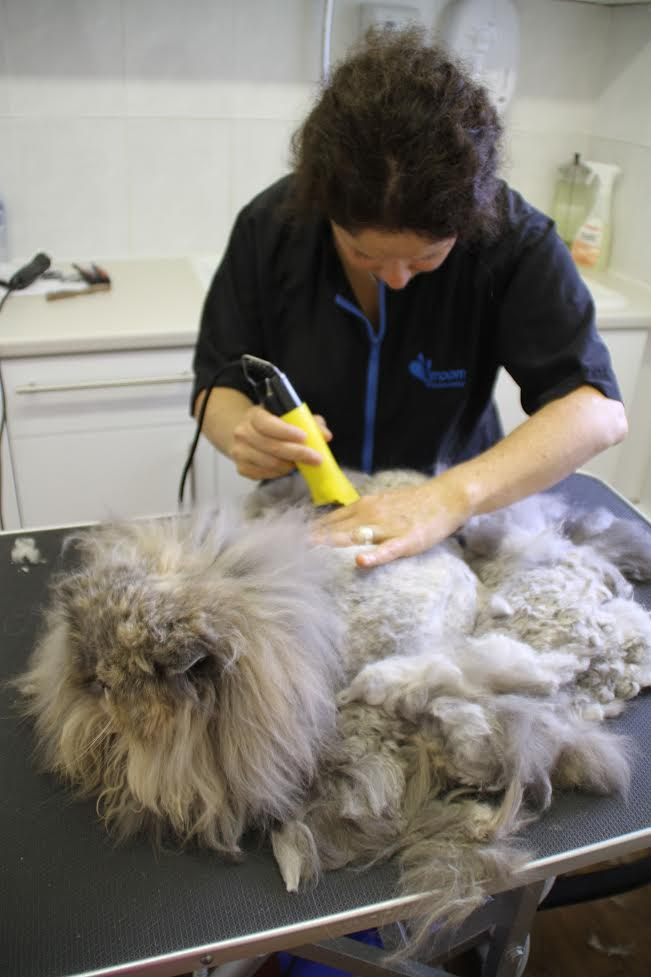 mobile cat groomer in Fulham