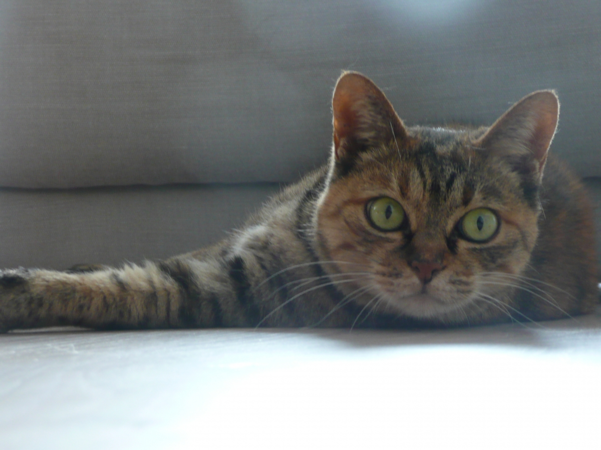 The Notting Hill Cat Sitting Company Gallery Cat Sitters