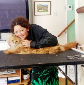 About London Mobile Cat Groomer The Very Best Cat Groomer
