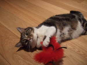 Premier Pet Care for Cats, small animals, birds and fish in West London